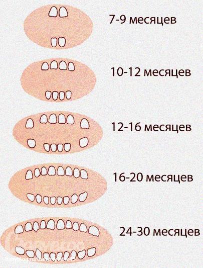 regutca-zuby